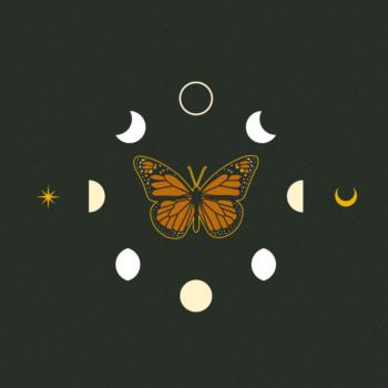 Artboard 3butterfly